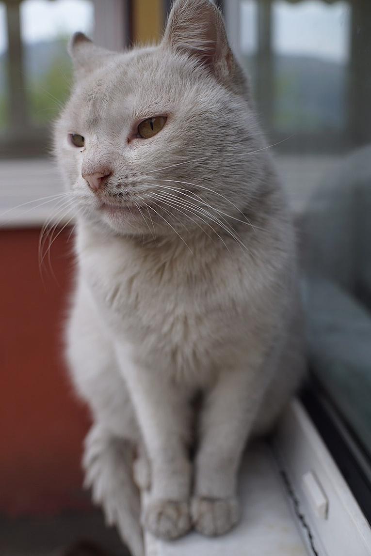 Kambersiz düğün olmaz. Görmüş geçirmiş kedi
